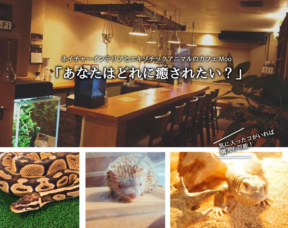 Exotic cafe MOO